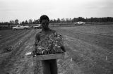 Man carrying a tray of plants in a field at Tuskegee Institute in Tuskegee, Alabama.
