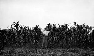 Demonstration plot of corn, Superintendent W. B. Coggin.