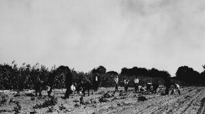 Demonstration Farm work (white) Hampton High School Boys working on agriculture plot