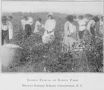 Cotton picking on school farm - Brewer Normal School, Greenwood, S.C