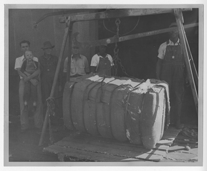 Photograph of men weighing a bale of cotton, Manchester, Georgia, 1953