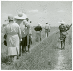 African American cotton plantation workers, hired as day laborers, walking next to cotton field at Hopson Plantation, Clarksdale, Mississippi Delta, Mississippi, August 1940