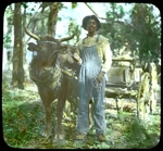 Man With Oxen and Wagon, ca. 1900-1915