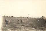 African Americans working in a field in Lowndes County, Alabama.