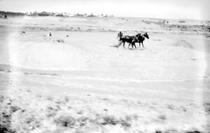 Untitled photo: Palestine