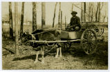 African American in an Ox Cart