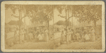 Scenes in the Fish market at Fredericksted, St. Croix, W. I