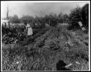 A woman picking vegetables in a garden