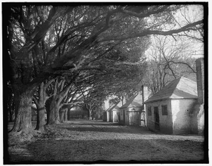 [Darkey cabins under the oaks, the Hermitage, Savannah, Ga.]