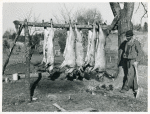 Hog killing on Milton Puryeur place; He is a Negro owner of five acres of land; Rural Route No. 1, Box 59, Dennison, Halifax County, Virginia; This is six miles south [on Highway No. 501] of South Boston; He used to grow tobacco and cotton but now just a subsistence living; These hogs belong to a neighbor landowner; He burns old shoes and pieces of leather near the heads of the slaughtered hogs while they are hanging to keep the flies away, Nov. 1939