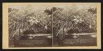Department of Horticulture, Sanitary Fair, Phila. [i.e. Philadelphia], 1864