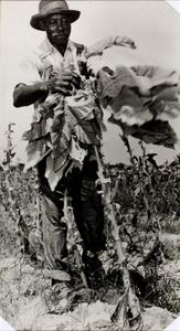 Tobacco Picker, Rocky Mount, N. C.