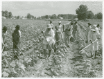 Bayou Bourbeaux Plantation operated by Bayou Bourbeaux Farmstead Association, a cooperative established through the cooperation of Farm Security Administration, August 1940