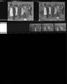 Set of negatives by Clinton Wright of Bob Bailey's sister's wedding, and Francine McClinton, 1965