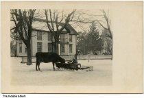Cow at a trough in front of a house, Coloma, Indiana, circa 1910