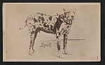 [Spot, Cuban Bloodhound, used for capturing escaped Union prisoners at Andersonville Prison, Andersonville, Georgia]