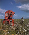 African American man operating a mechanical cotton picker on Price McLemore's Oaks Plantation in Montgomery County, Alabama.