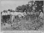 Field demonstration in cultivating cotton; The Negro is naturally a farmer and takes a keen interest in putting to use the better practices learned at demonstration meetings