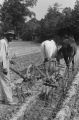 Farm scenes: Don Stuart Farm. Vicksburg, Miss. Don Stuart cultivating cotton, house exterior, barn, smokehouse, henhouse, mules and dogs (FSP C-68 #511)