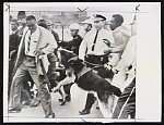 [A police dog attacking an African American man, as police break up crowd gathered outside court house, Jackson, Mississippi, for trial of sit-in demonstrators]