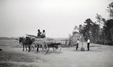 African Americans, cabin, mule & wagon