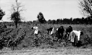 Garden, Industrial school of Virginia Randolph's. Children working in the garden.