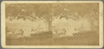 Views in the Danish Church Yard, Fredericksted, St. Croix, W. I