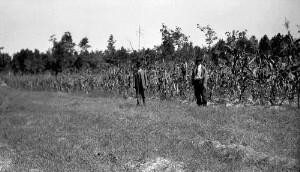 Demonstration farm work. Moses Fitzgerald's farm showing Boy's demonstration acre corn.