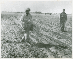 African American Captain Richard W. Williams, executive officer of the 555th Parachute Infantry Battalion, walking in an open field with the ropes of a deflated parachute hanging from his parachute pack, Normandy Field, Alabama