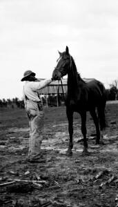 T.O. Sandy's horse.