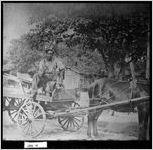 Photograph of man on wagon, Jenkins County, Georgia, ca. 1930