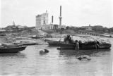 Brazil, pigs wading in river at Manaus waterfront