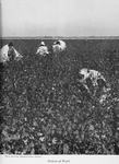 Pickers at work