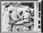 [Packing layers of peaches in baskets on a farm, St. Francis county, Arkansas]