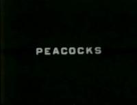 Florida. Peacocks, 1932