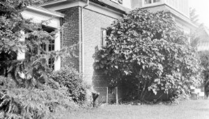 Jackson Davis's house at 3907 Seminary Avenue.
