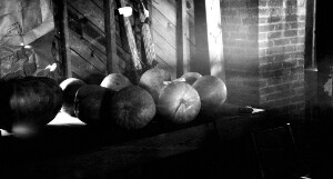 Exhibit School Fair. Eight pumpkins on one vine