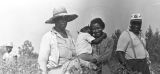 People in the cotton field of Mrs. Minnie B. Guice near Mount Meigs in Montgomery County, Alabama.