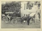 Our buggy, Jamaica