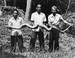 STRI Staff Holding Snake