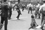 Thumbnail for Walter Gadsden, a student at Parker High School, after being attacked by police dogs during a civil rights demonstration in downtown Birmingham, Alabama.