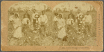 Pickers Grouped in Cotton Field