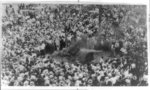 [Large crowd watching the lynching of an African American, possibly, Jesse Washington, in Waco, Texas]