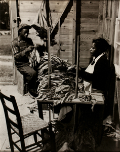 Tying Tobacco Leaves, Rocky Mount, North Carolina