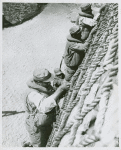 Three African American GI's climbing a rope wall during practice for a sea rescue maneuver, Fort Lawton, Washington