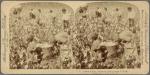 Cotton is King, Plantation Scene, Georgia, U. S. A