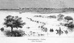 Oversvommelse i Sudan