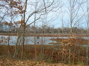 Harriet Tubman Underground Railroad Byway - An Autumn-draped Tuckahoe Crossing