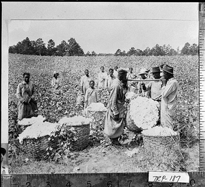 Photograph of African American farm workers watching a basket of cotton being weighed, LaGrange, Troup County, Georgia, ca. 1933
