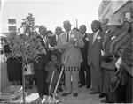 Tree planting, Los Angeles, 1964